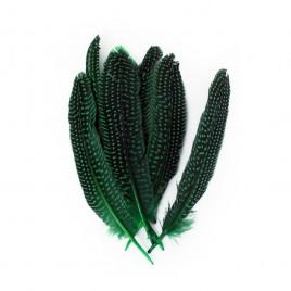 Veren parelhoen (groen 15/20cm per st)