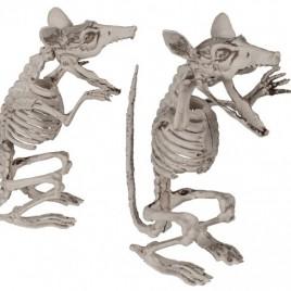Halloween Rattenskelet